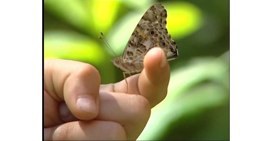 ¿Qué es la piel de mariposa?